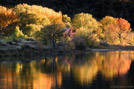 Photograph: The Rio Grande with autumn color trees