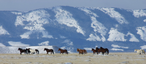 Clickable Image: Photograph Wild Horses, Taos Art School Workshops, work shop, workshop, photo